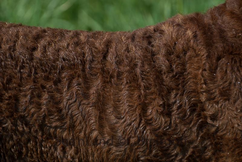 Talas Fell ist vorzüglich, mit dichter Unterwolle